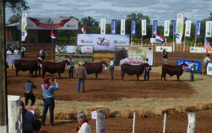 Santa Gertrudis world congress