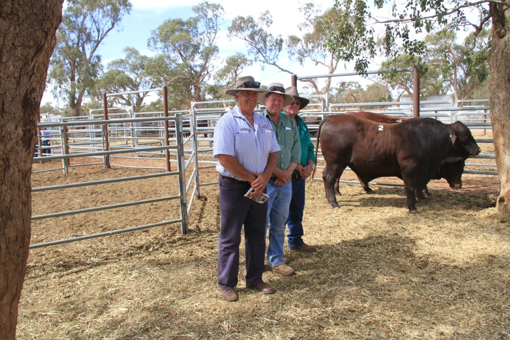 Phillip Hague Rockingham with Lot 2 and the purchasers from Ballatherie Pastoral Hay (003)