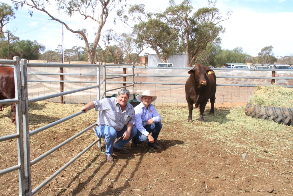 Ross Hague the purchaser and Dean Hague Rockingham with the top selling bull Lot 3 Rockingham Night Cap (P) which sold for $10.000